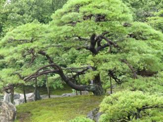 Kyoto 8